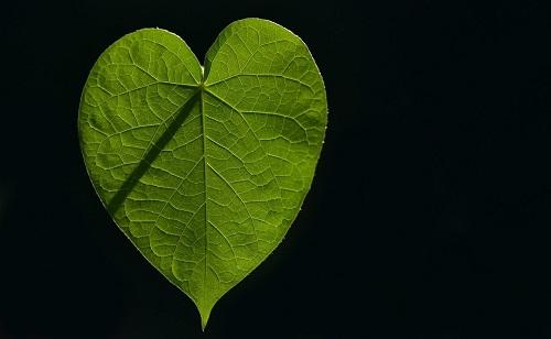 Een hartje als onverwacht teken van je gids